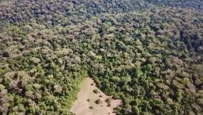 An aerial view of Ngong Road Forest