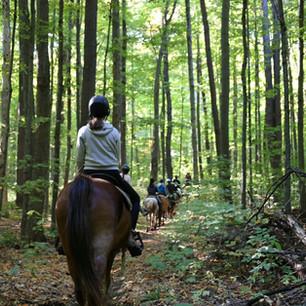 Horse riding 2.jpg