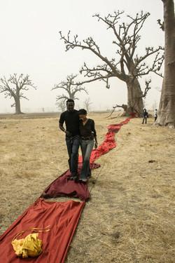 marche sang baobab
