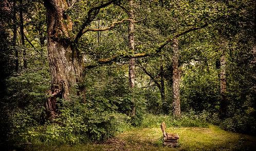 En plass i skogen