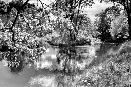 The River Beauty BW