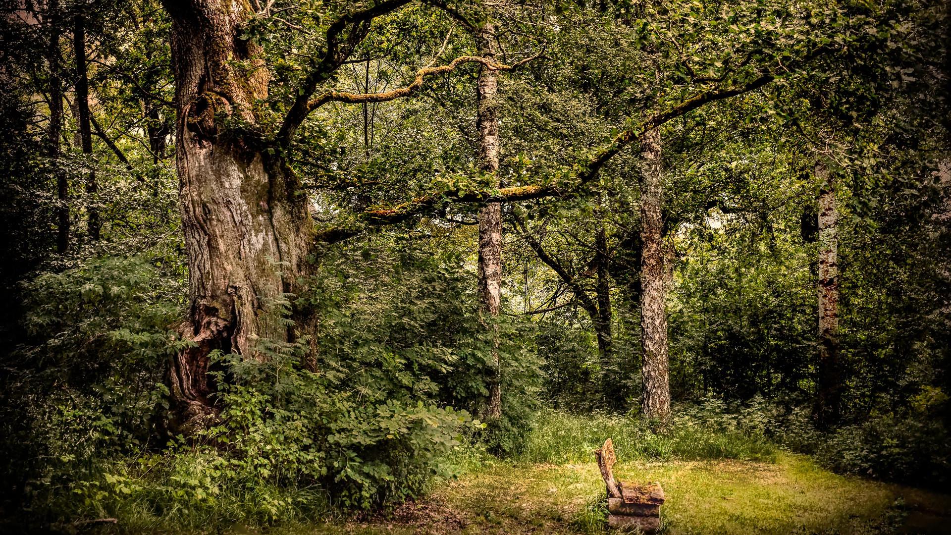 En plass i skogen.jpg
