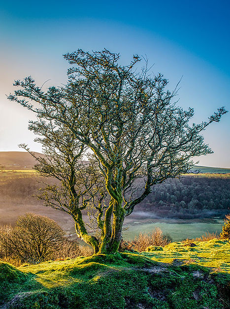The Tree (Treet)