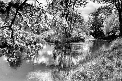 The River Beauty #1