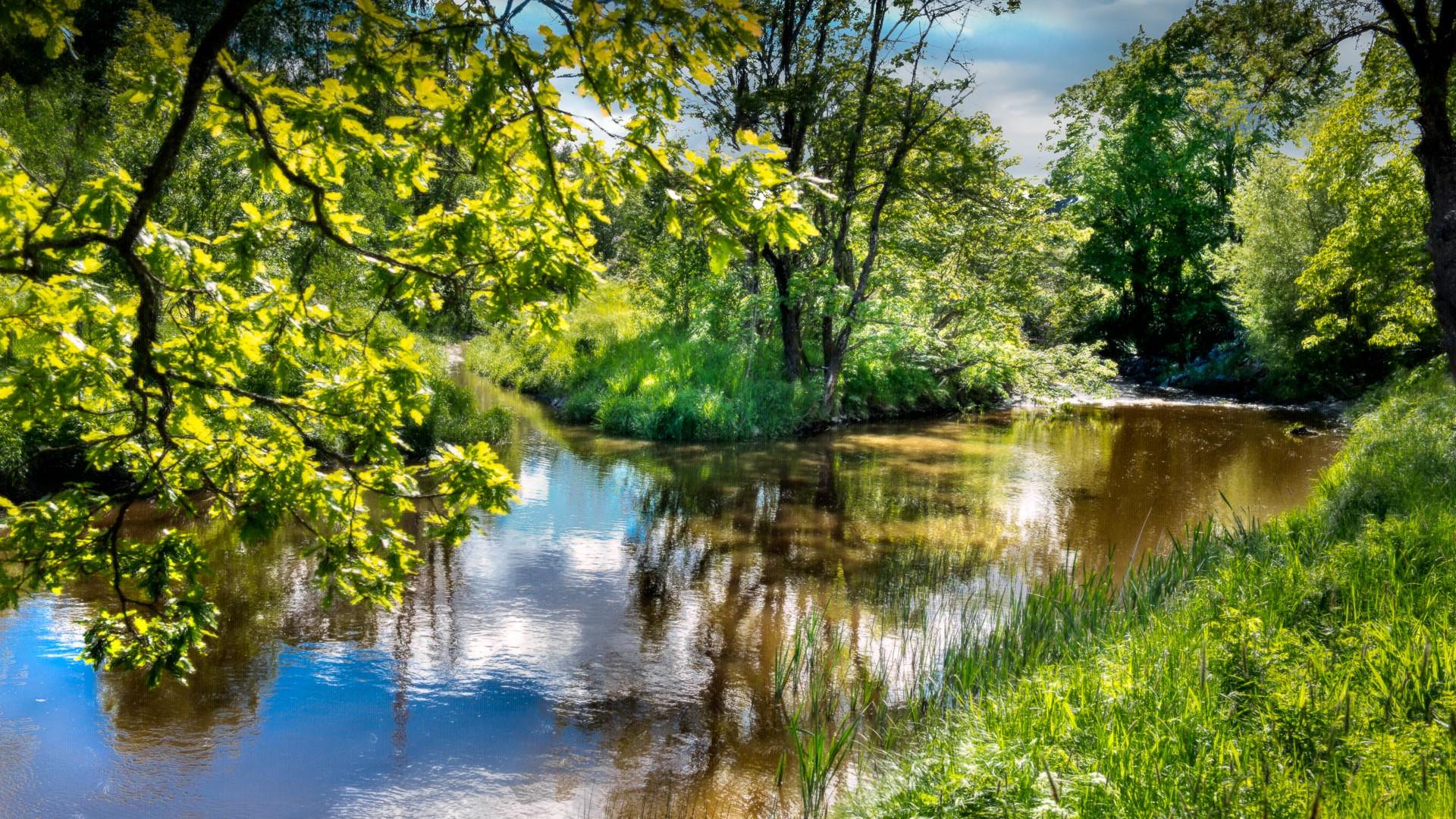 River Beauty #1