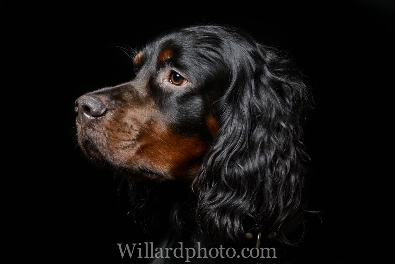 Dogportrait-17.jpg