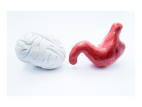Your Gut-Brain Connection | Alzheimer's Proof