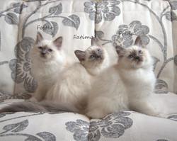 Фостер, Фатима и Фрида.jpg