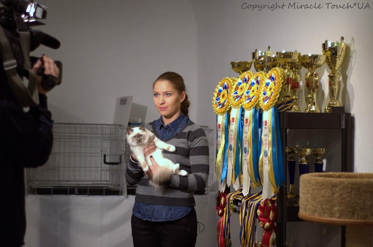 Дейзи, Киев, 4 мес.