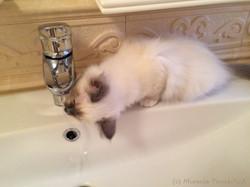 Мира пьёт водичку