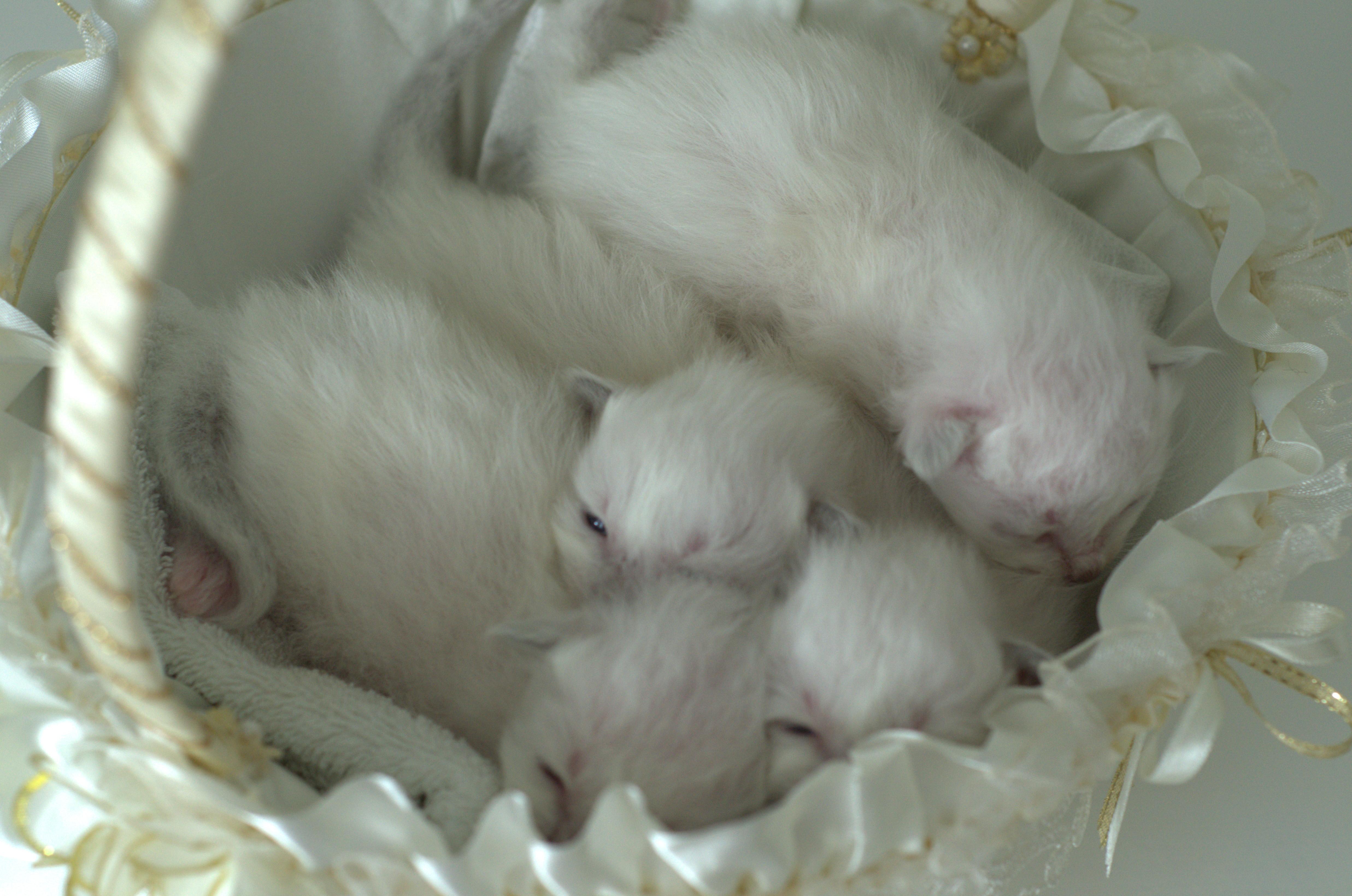 H-котята в корзинке