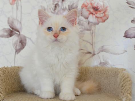 Новые фото котят!