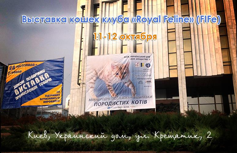 Выставка кошек Украинский Дом