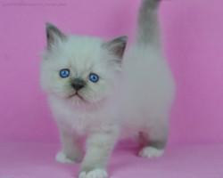 Kashemir cute boy