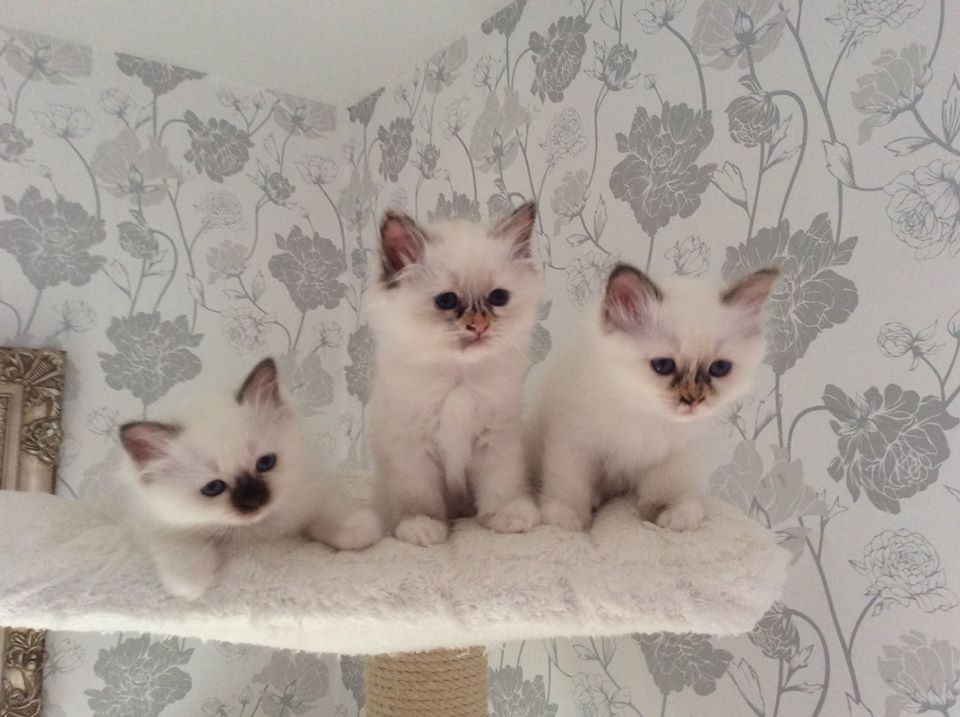 Джулия, Джульетт и Йолин