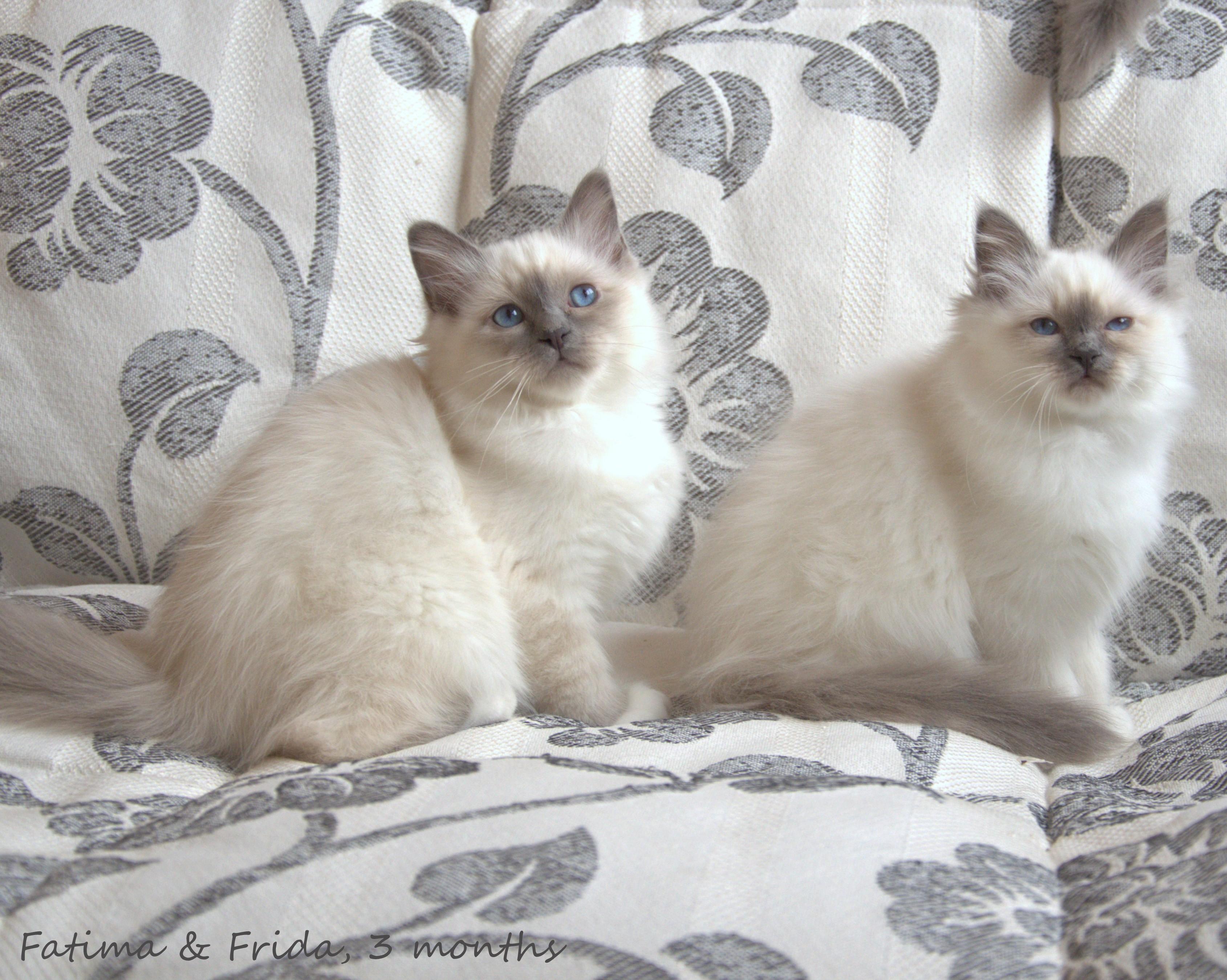 Фатима и Фрида.jpg