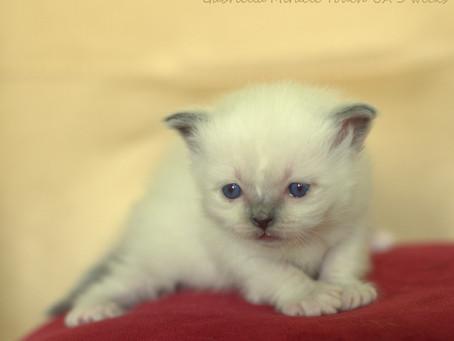 Новые фото G-котят!