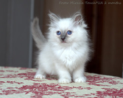 Foster 2 months.jpg