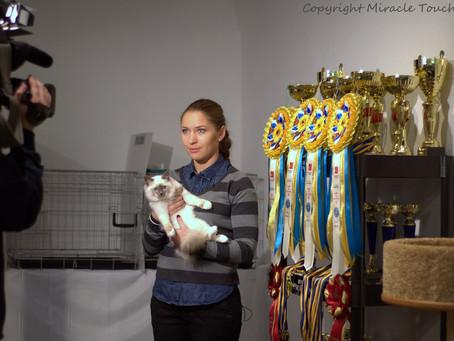 Выставка кошек, Киев, Украина