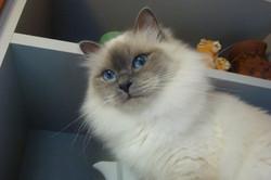 Шакира, 2 года