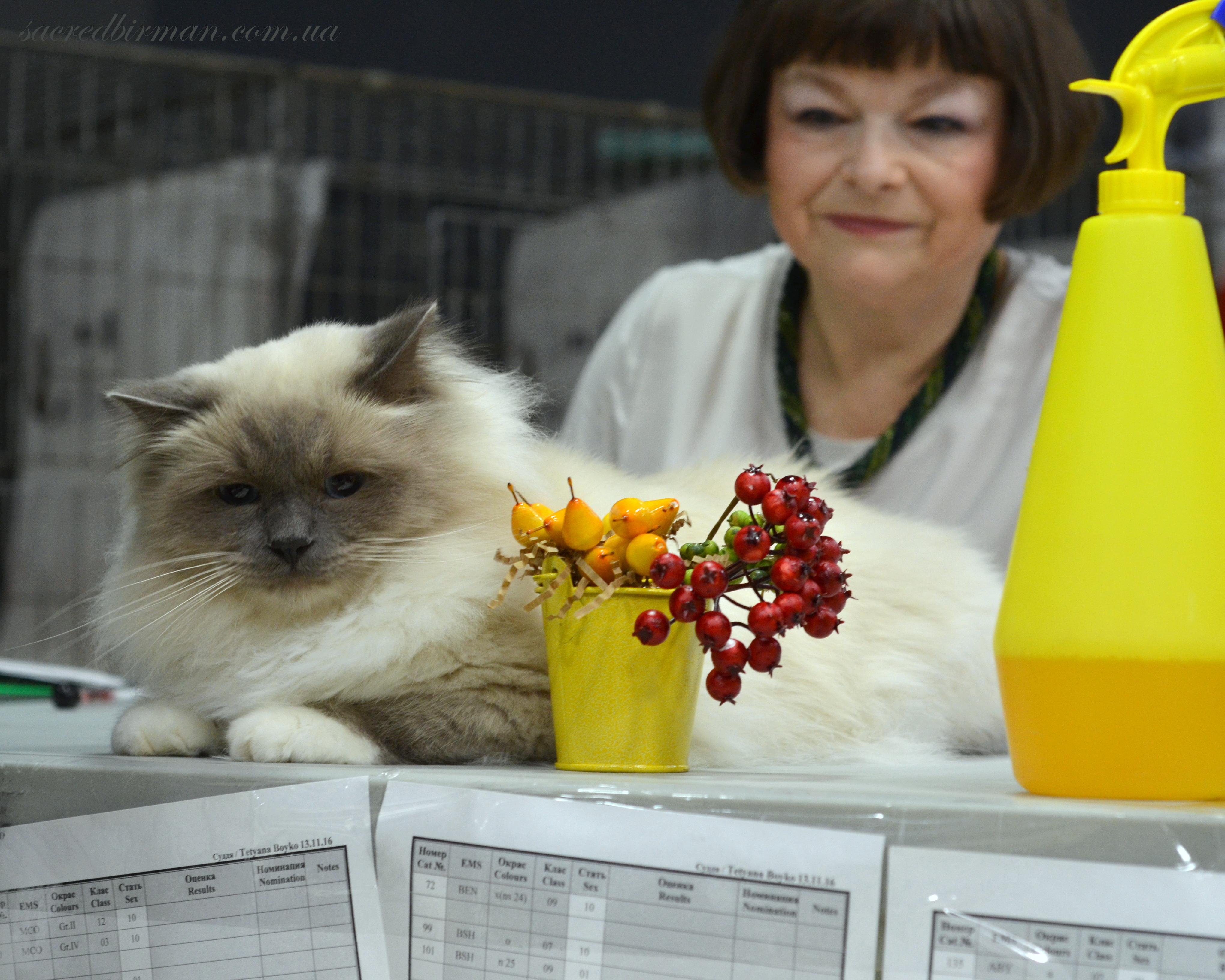Бобик у Татьяны Бойко