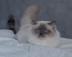 Бобби недоволен, 2, 5 года