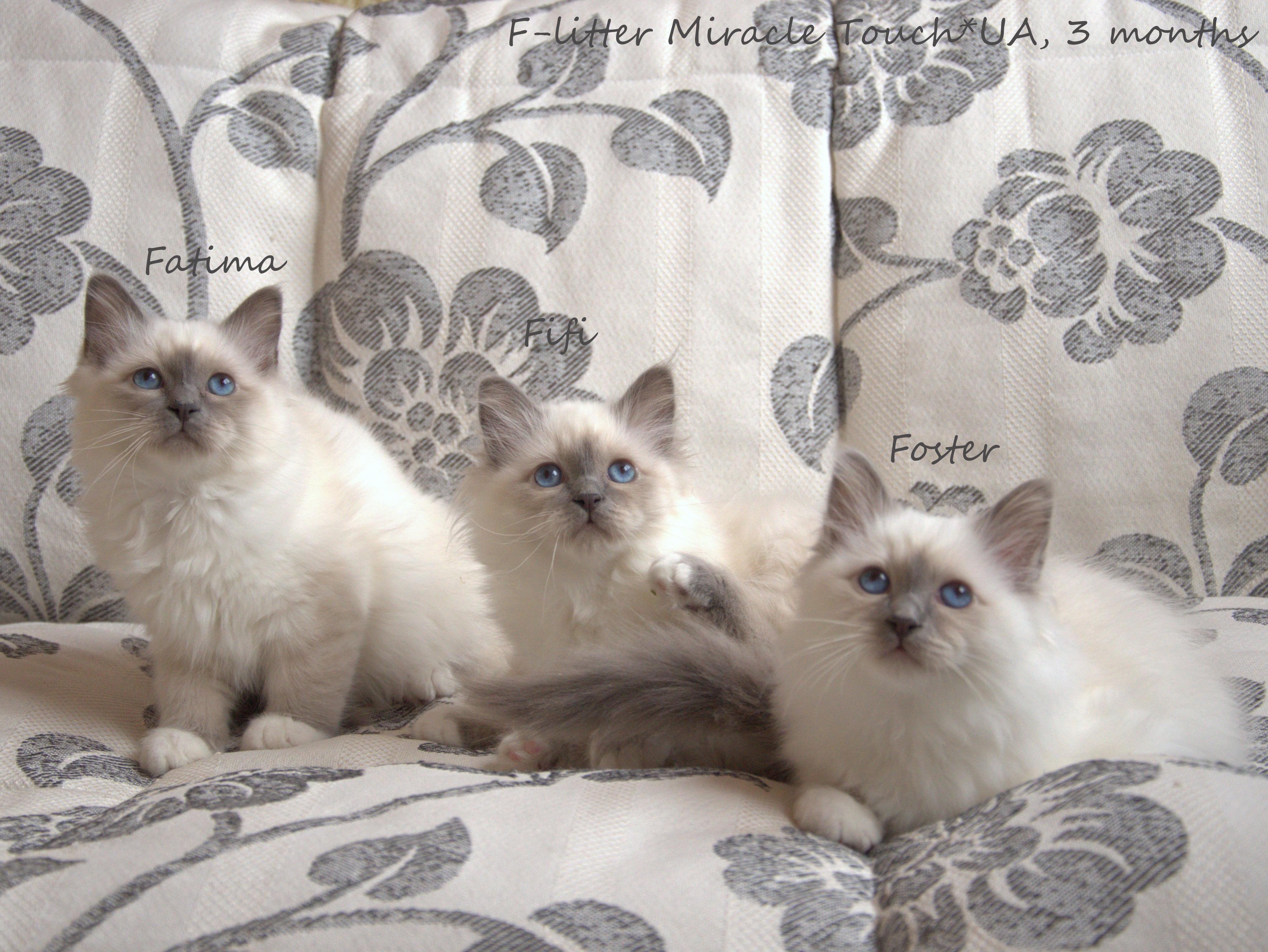 Фатима, Фифи, Фостер.jpg