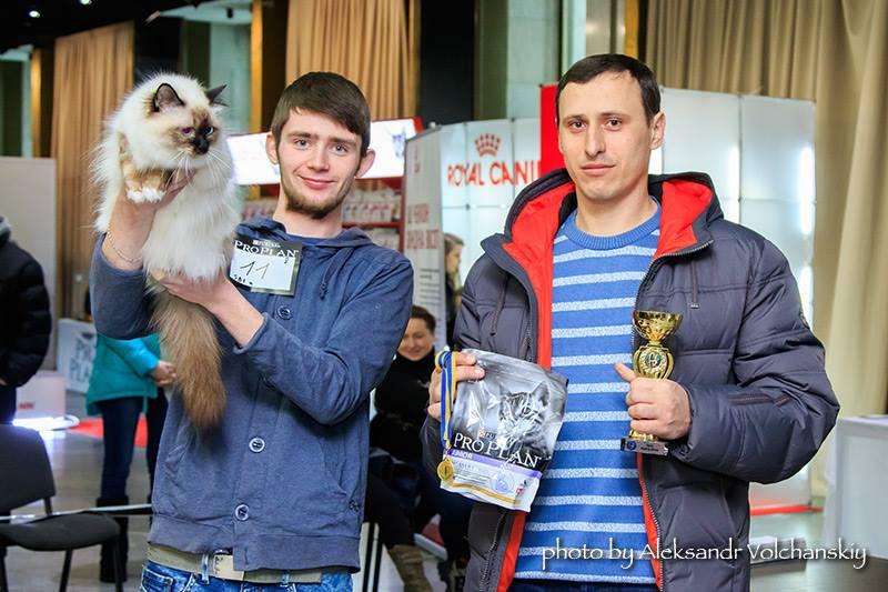 Дения выставка кошек в киеве