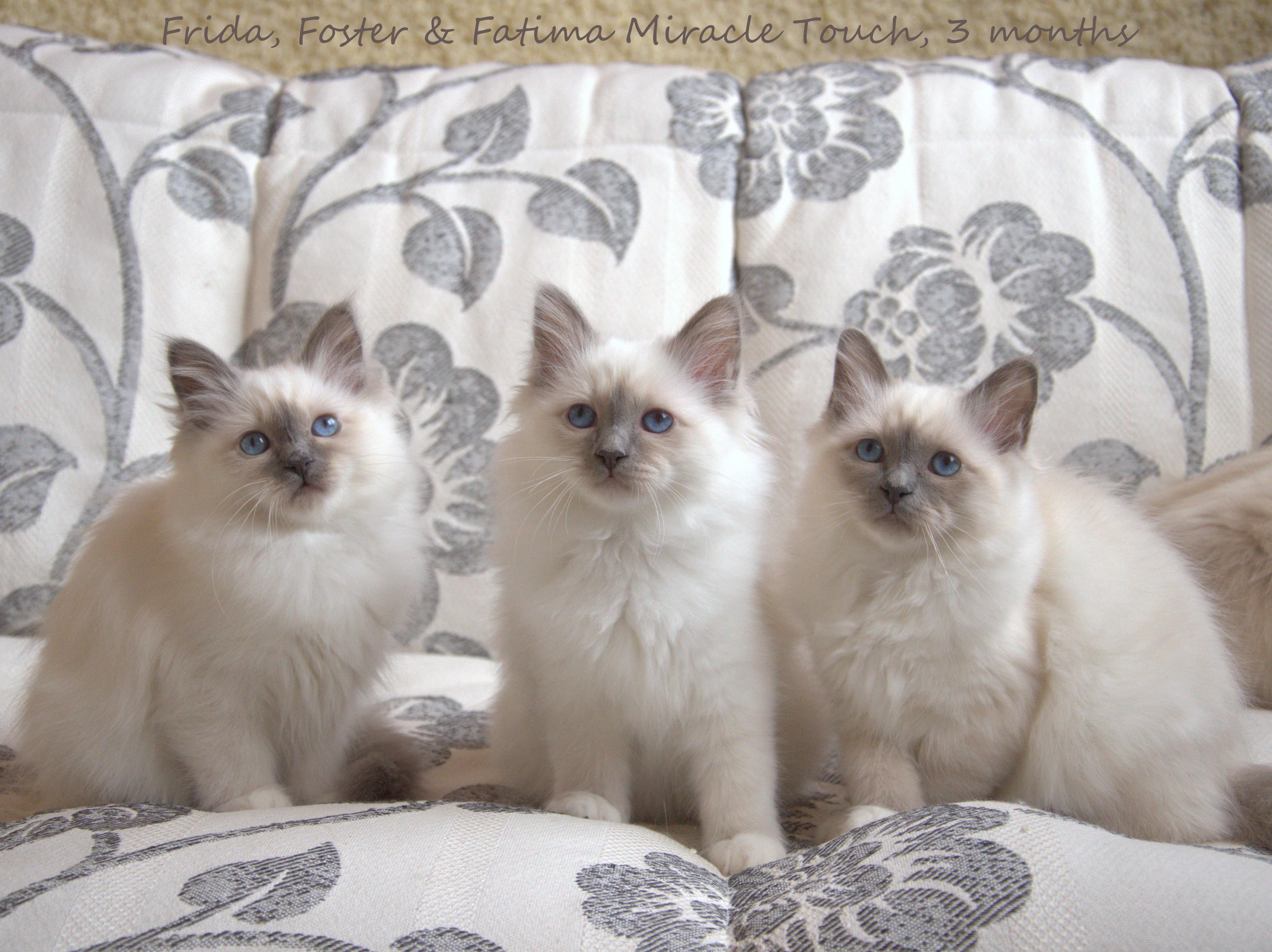 Фрида, Фостер и Фатима 2.jpg