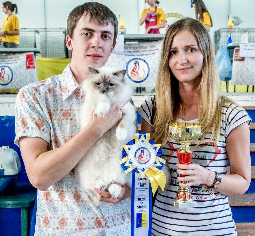 Бобик лучший кот 2 категории