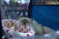 Бобик дремает в палатке