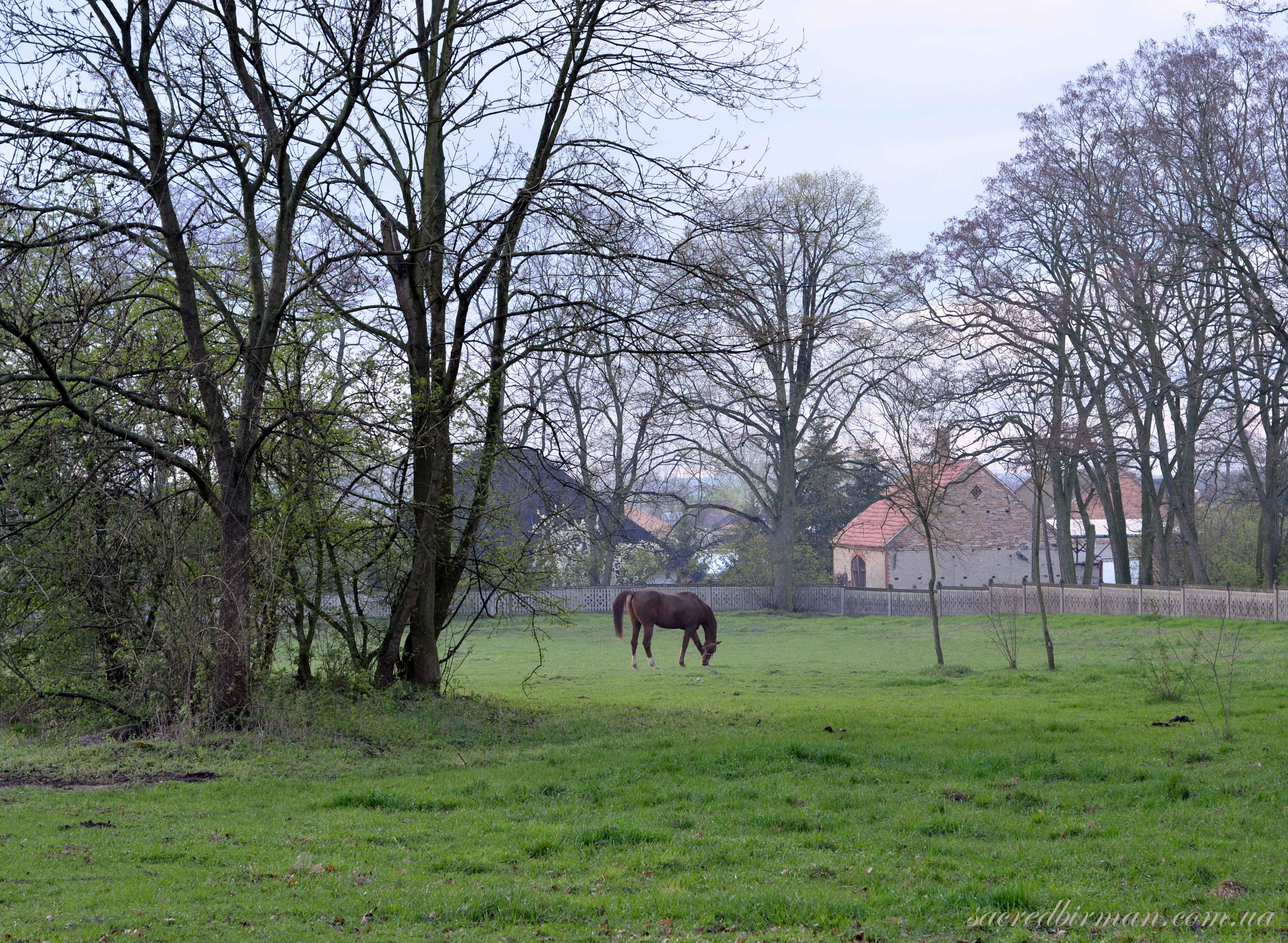 Польский кінь