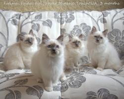 Фрида и котята 3 месяца.jpg