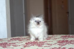 Frida 2 months (1).jpg