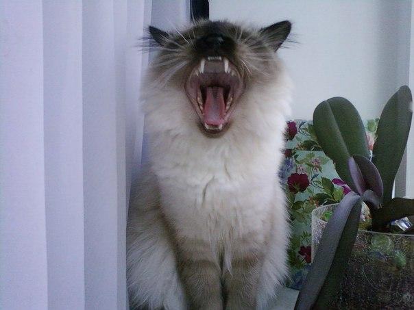 Сид зевает