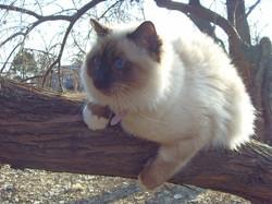 Сид на дереве