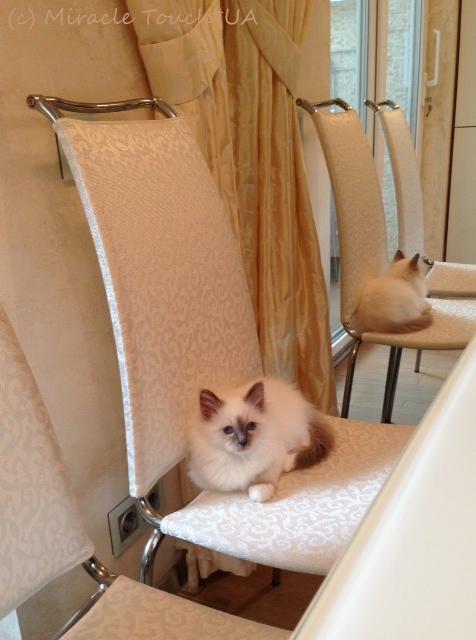Фостер на стуле