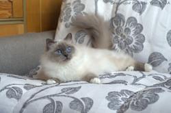 Шакира, 4 года