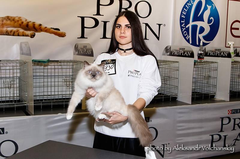 Выставка кошек Роял Канин