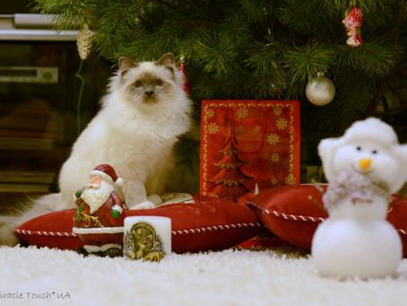 С Новым 2014 Годом и наступающим Рождеством!