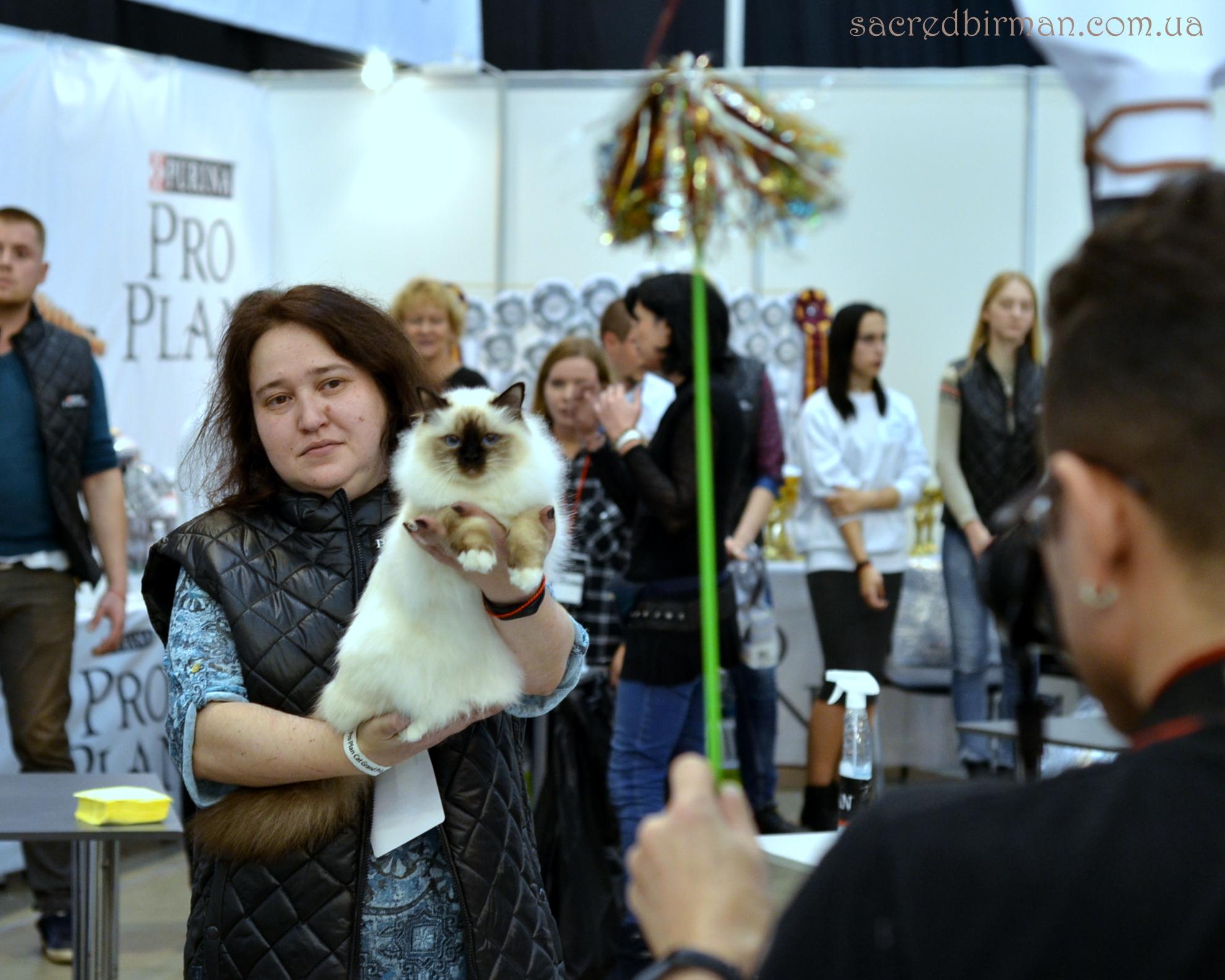 Выставка кошек Гран При