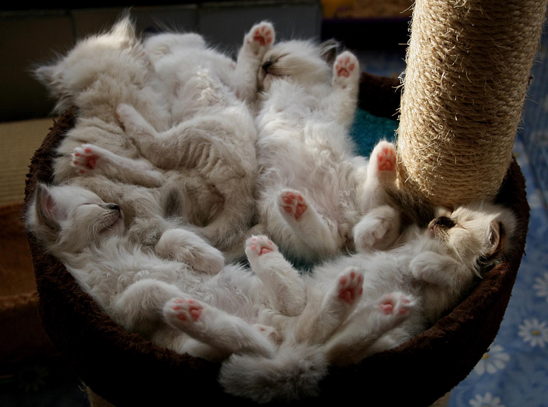 Д котята спят