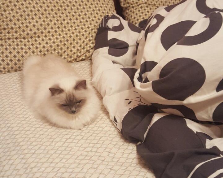 Китюня готовится ко сну