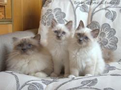 Бобби, Фостер и Фатима.jpg