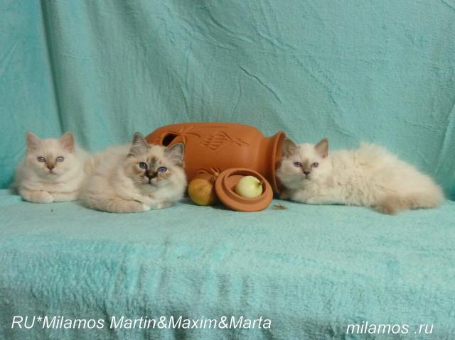 Максим с братиком и сестричкой