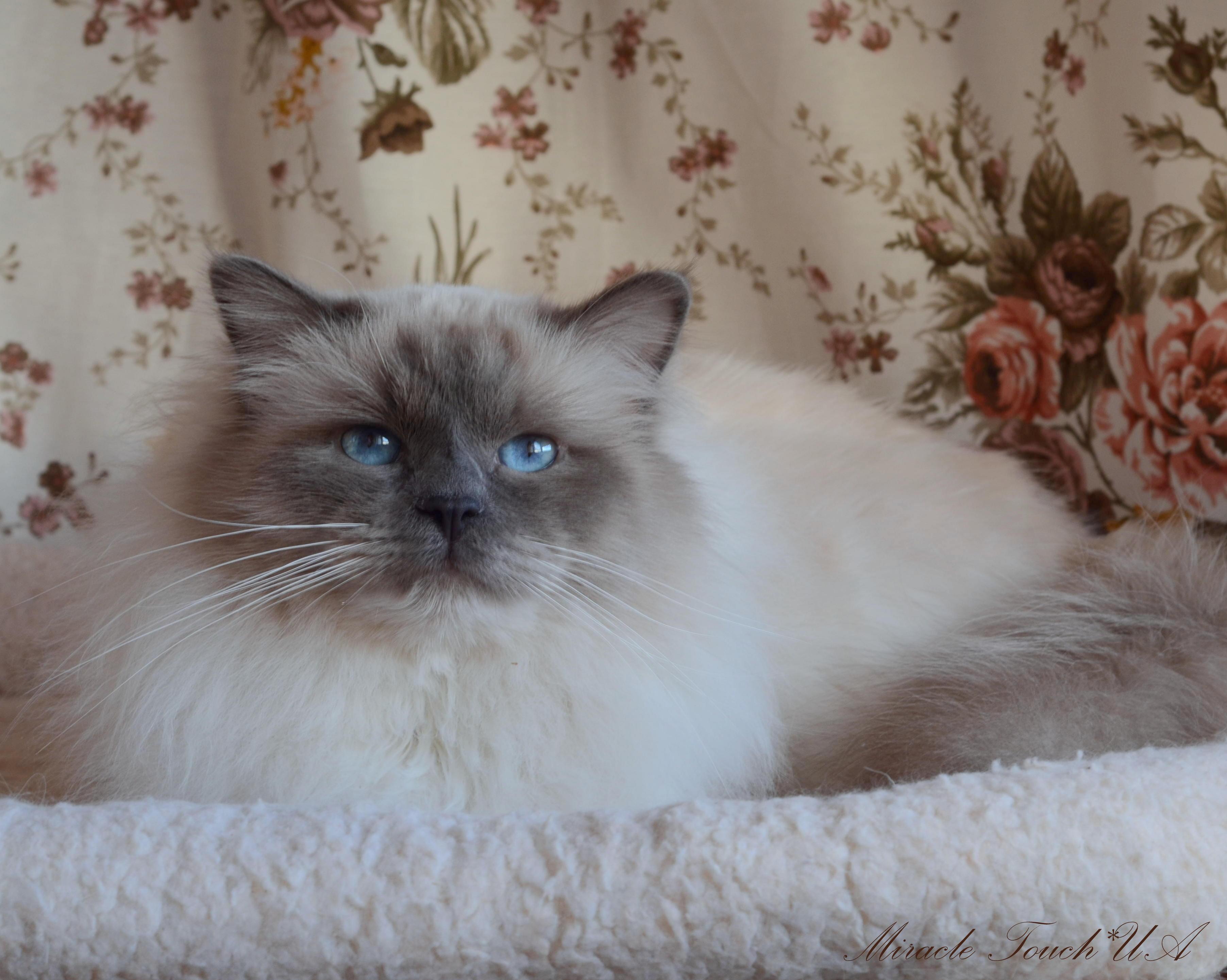Бобби 2,5 года