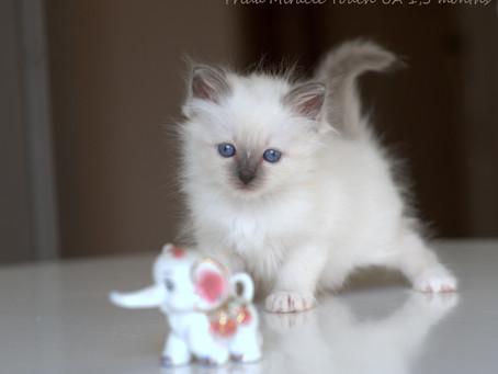 Новые фото F-котят!