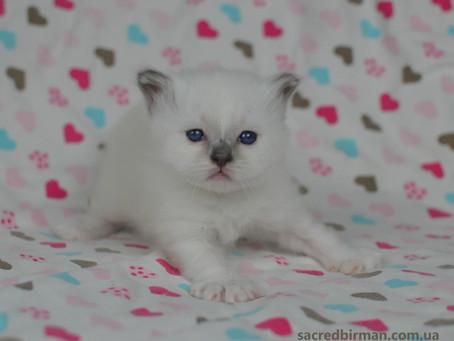 Довгоочікувані R-кошенята!