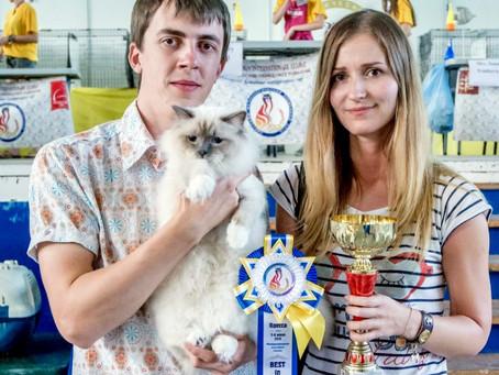 Выставка кошек в Одессе