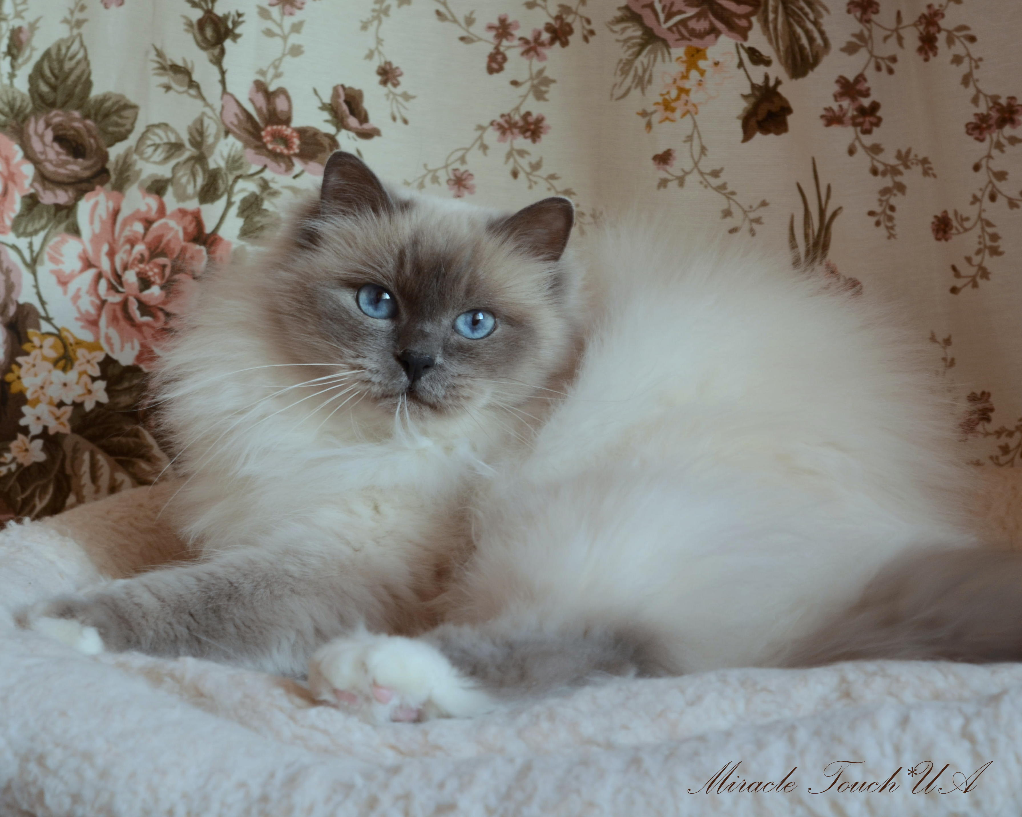 Баронесса Шакира